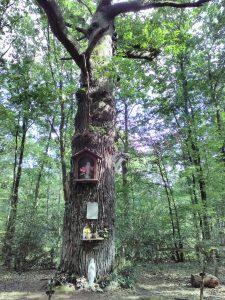 Le Chêne aux Clous du Pâtisseau, arbre dédié à Marie