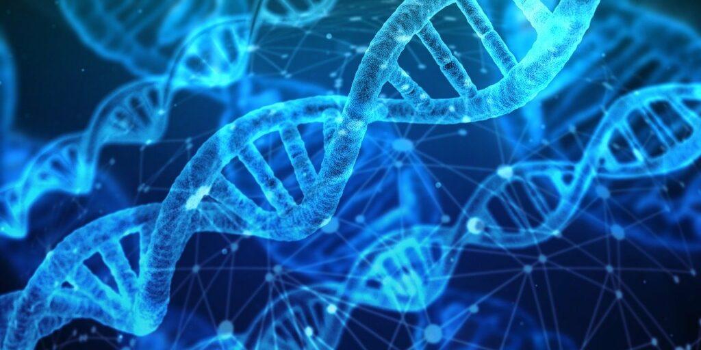 Brins d'ADN réparés