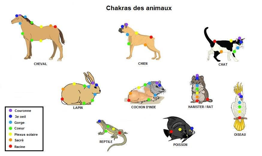 Les animaux domestiques et leurs chakras