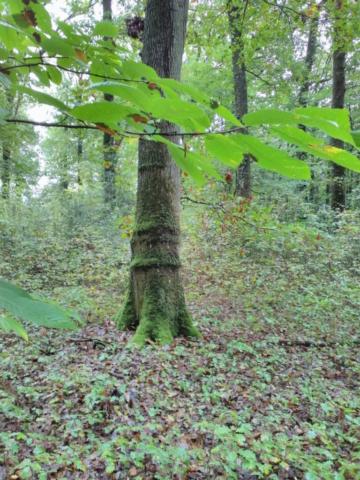 Le Choix-peau magique, dans la Forêt du Gâvre