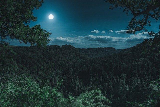 Pleine Lune au-dessus de la forêt