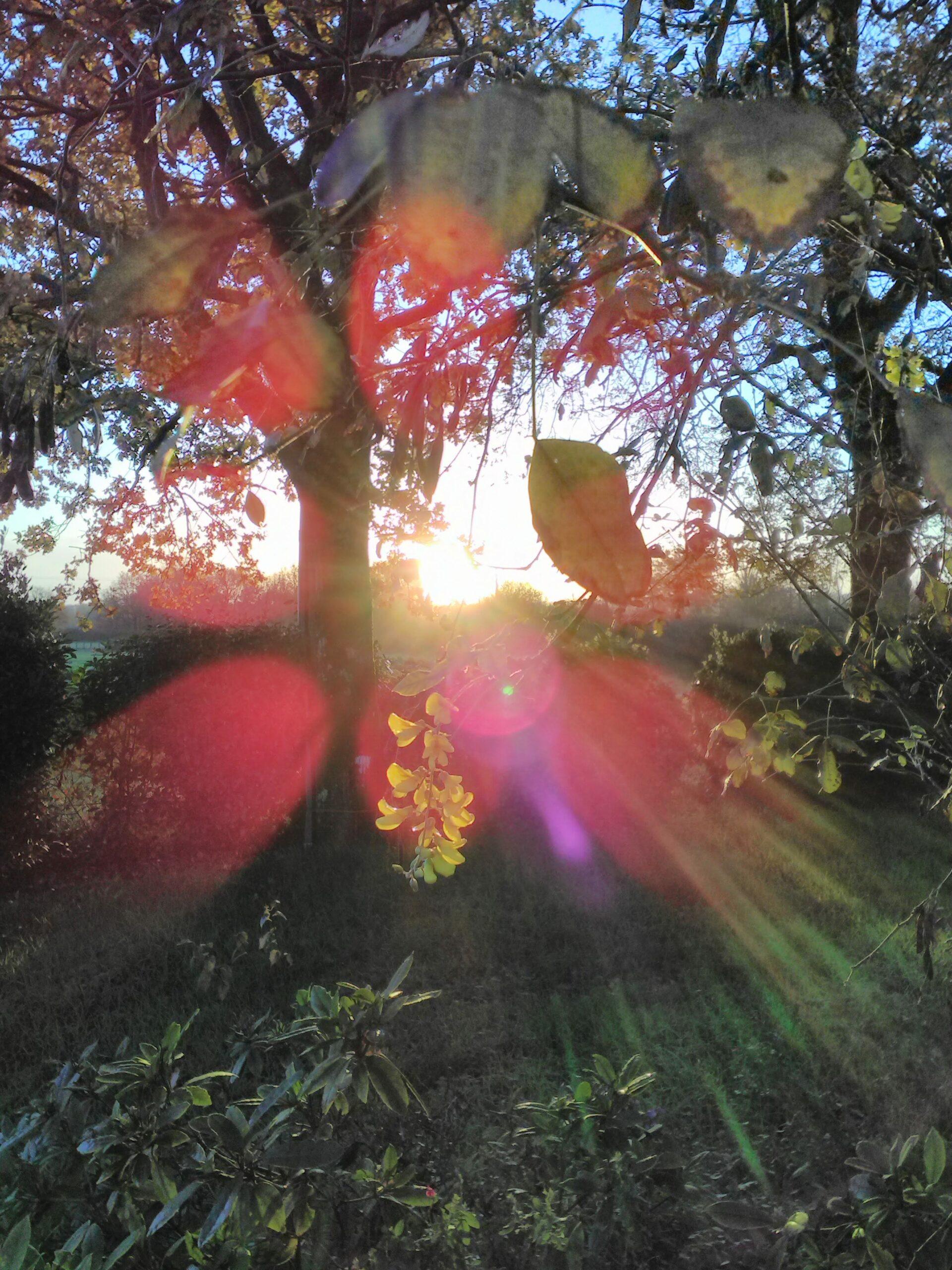Fleur de Cytise, Décembre 2020 : un second printemps !