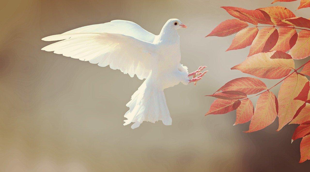 L'Espoir du retour de la Paix !