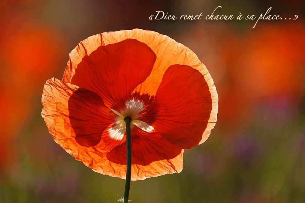 """Fleur de coquelicot, soleil, Espoir : """"Dieu remet chacun à sa place"""""""